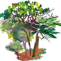 Illustration filière ressources forestières. © Delphine Guard-Lavastre, Cirad