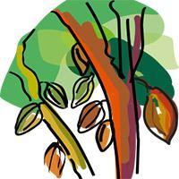 Cocoa value chain illustration © Delphine Guard-Lavastre, CIRAD