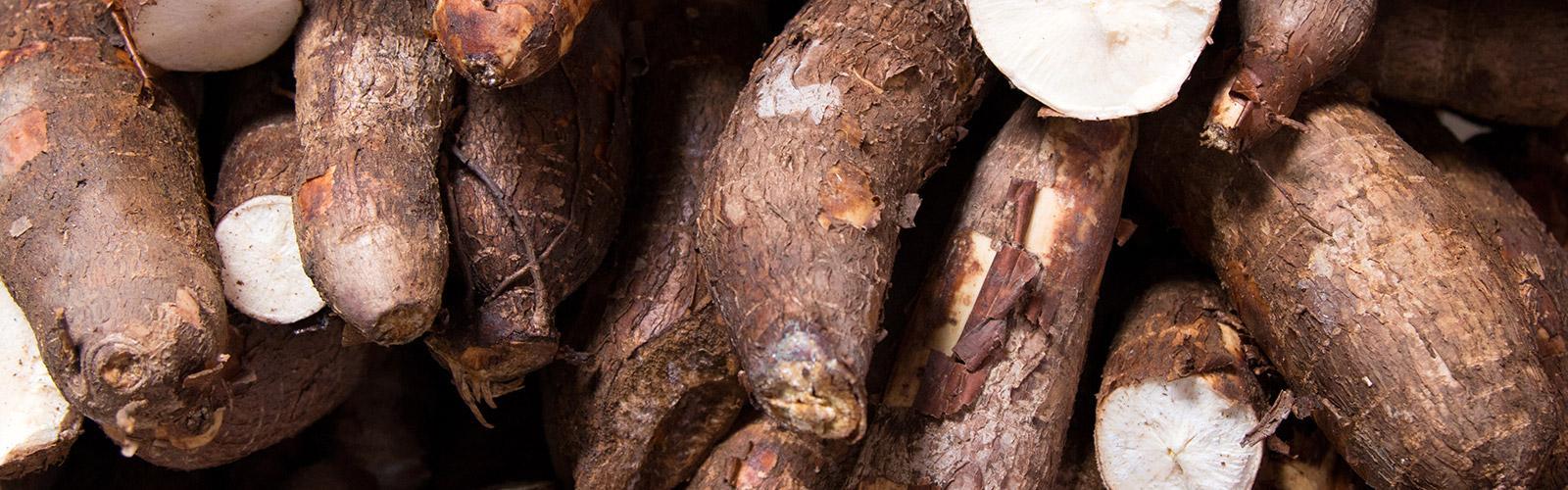 Root of Manioc  © Gustavo, Adobe Stock