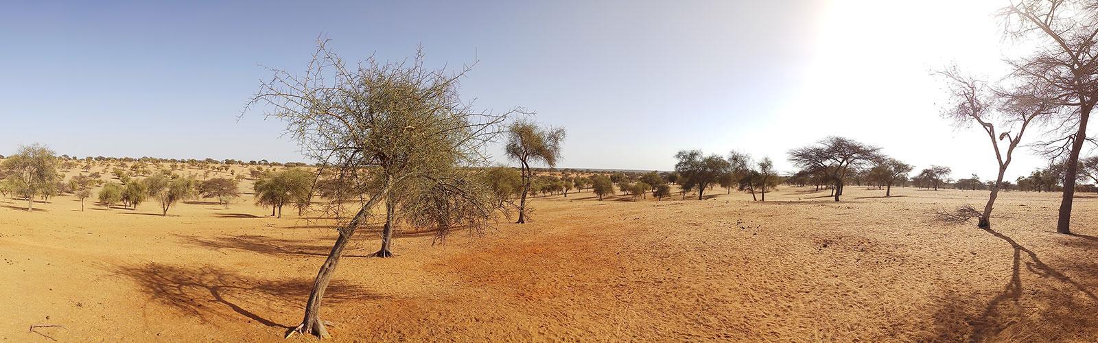 Zone sylvopastorale en saison sèche dans le Ferlo, Sénégal. © S. Taugourdau, Cirad