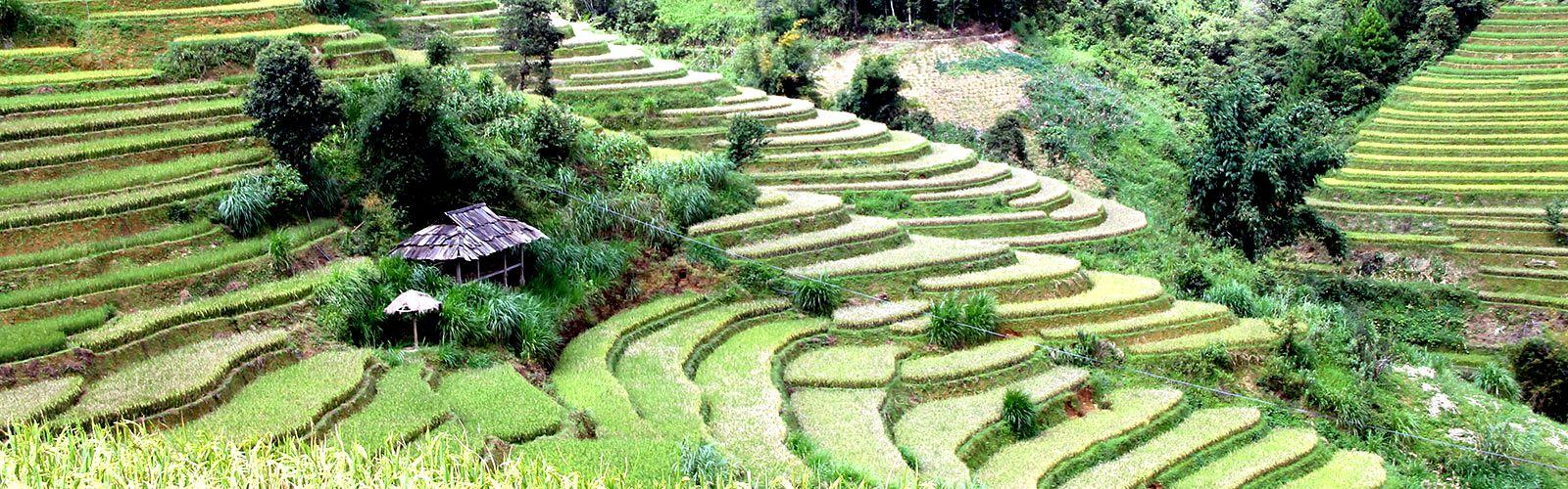 Rizières en terrasses du nord Vietnam © P. Girard, Cirad