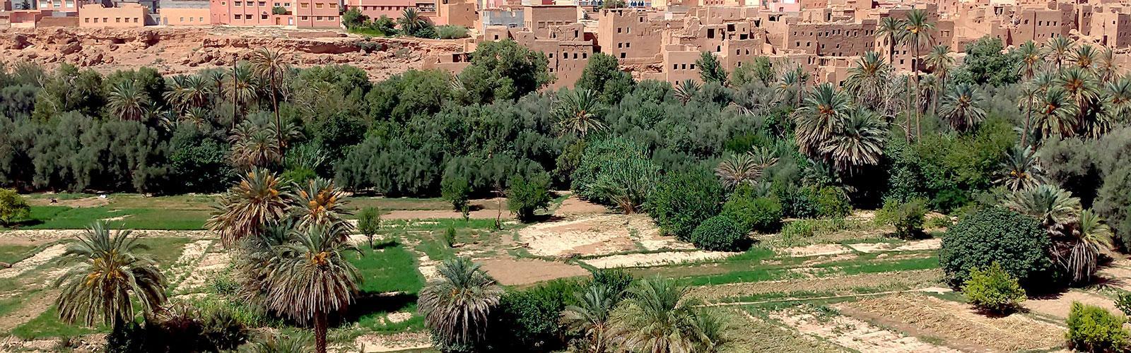 Oasis de Tinghir, Maroc. © G. Lacombe, Cirad