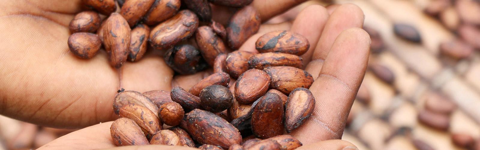 Cocoa beans, Cameroon © E. Fidele, Unsplash