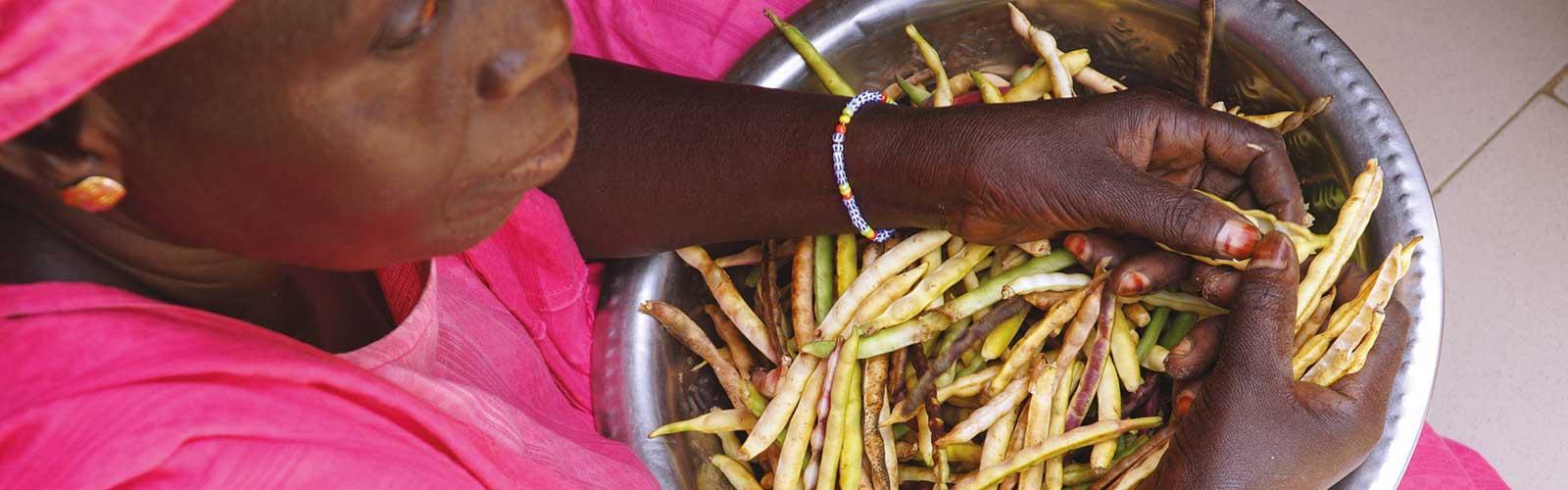 Ecossage du niébé au Sénégal. © C. Dangléant, Cirad